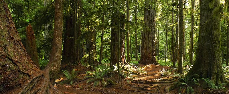 Logging Around Cathedral Grove Highlights Need For