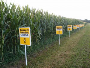 Labelling of GMOs: A backgrounder & what do you think?