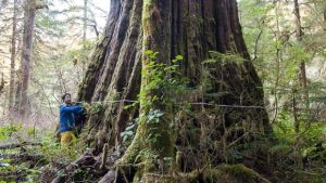 Reinvesting in British Columbia's Forest Sector